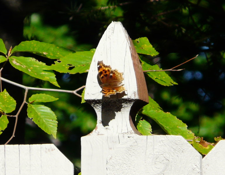 Sightings for October 2015 | NABA Butterfly Sightings